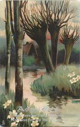 winter trees on either side of stream, cottage behind, narcissi