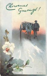 man leads horse and cart front, white pansy with red centre left