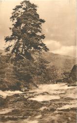 ON THE DOCHART prominent tree