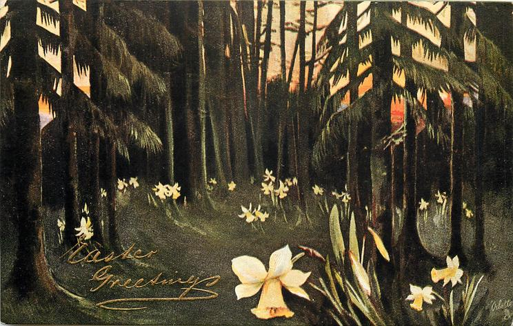 wood scene with many trees, yellow narcissus flowers all around