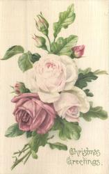 CHRISTMAS GREETINGS roses