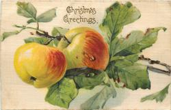 CHRISTMAS GREETINGS two apples, attached to branch