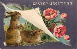 EASTER GREETINGS two rabbits under turned up page turned up, pink anemones right