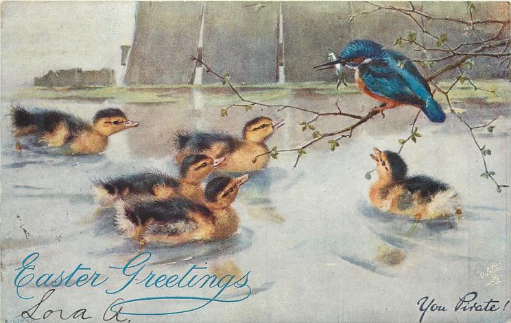YOU PIRATE! blue coloured bird steals fish from ducklings