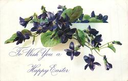 TO WISH YOU A HAPPY EASTER  violets, violet flowers, plant appears to grow over side of stone wall