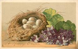 A HAPPY EASTER  six eggs in birds nest, many violets right