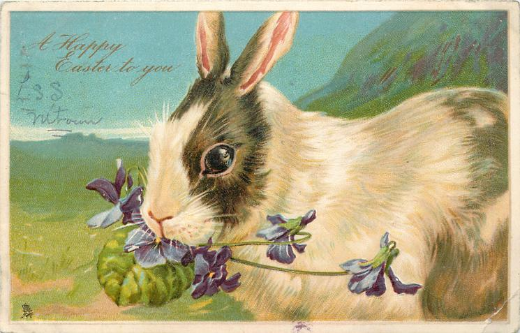A HAPPY EASTER TO YOU  white rabbit  with brown patches, facing left front, eating violets