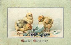 EASTER GREETINGS  three chicks, violets & egg-shell