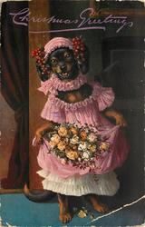 dachshund in pink with flowers doing a curtsey