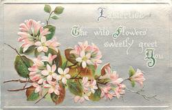 EASTERTIDE. THE WILD FLOWERS SWEETLY GREET YOU  pink apple blossoms