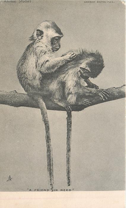 """""""A FRIEND IN NEED""""  two monkeys"""