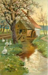 TO WISH YOU A HAPPY EASTER  four white ducks left, water mill behind blossom tree