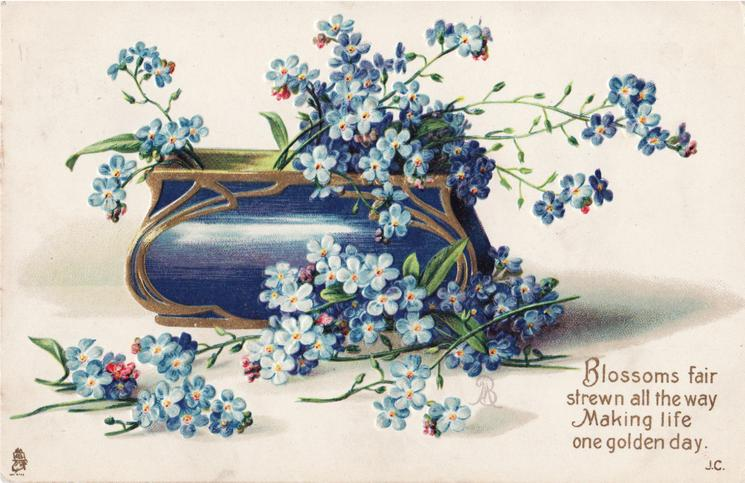 forget-me-nots in blue trough