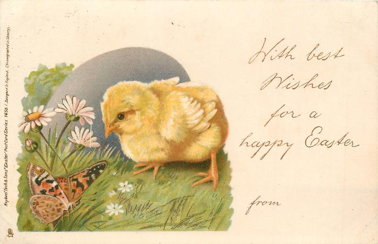 WITH BEST WISHES FOR A HAPPY EASTER FROM chick watches butterfly, daisies behind
