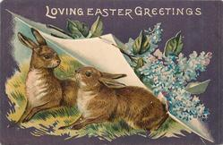 LOVING EASTER GREETINGS two rabbits centre/left, look at each other under turned up page with blue lilac right