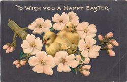 TO WISH YOU A HAPPY EASTER  two chicks sit on branch of blossom tree