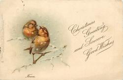 CHRISTMAS GREETING AND SINCERE GOOD WISHES  FROM two robins flirt