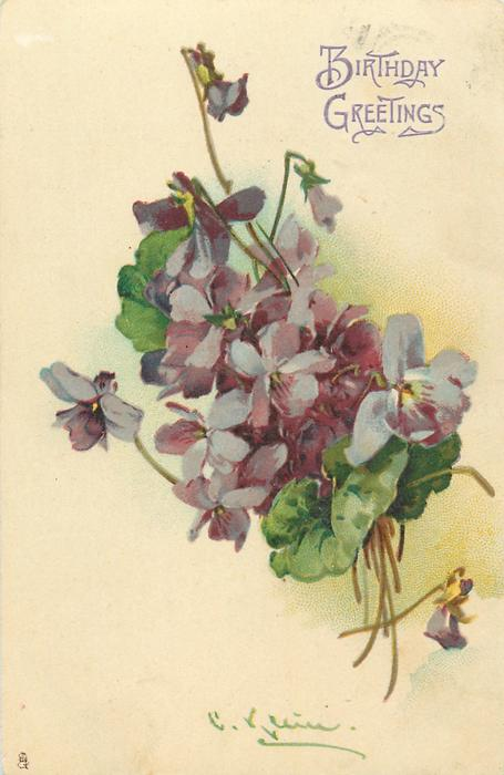 bunch of purple violets, stalks lower right, one flower lower right