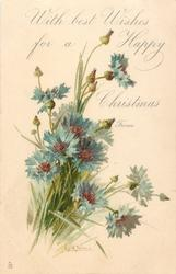 WITH BEST WISHES FOR A HAPPY CHRISTMAS, FROM  blue cornflowers
