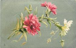 two pink & one white carnations, three buds
