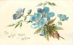TO WISH YOU WELL  blue flax