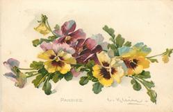 PANSIES  across middle of card