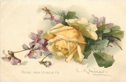 ROSE AND VIOLETS