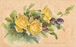 ROSES AND PLUMS