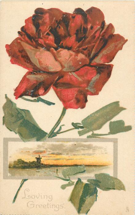 LOVING GREETINGS  rose