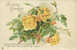 BIRTHDAY GREETINGS  yellow roses & buds