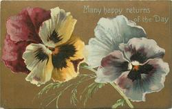 MANY HAPPY RETURNS OF THE DAY  two pansies: yellow & pink left, white right
