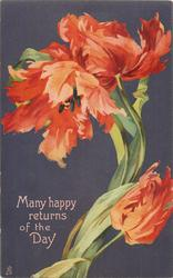 MANY HAPPY RETURNS OF THE DAY  three red frilly tulips