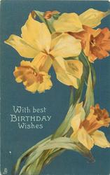 WITH BEST BIRTHDAY WISHES  three daffodils