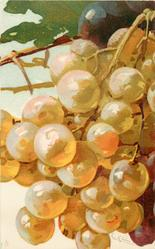 GRAPES  white/yellow
