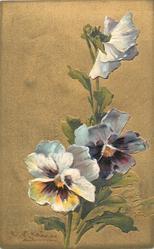 three mauve-white pansies, signature bottom left