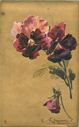 two dark purple pansies, one bud, signature bottom right