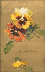 two multicoloured pansies above, one yellow below, stems to right center, signature middle right
