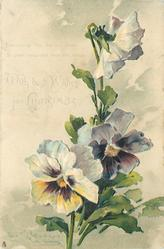 WITH BEST WISHES FOR CHRISTMAS  pansies