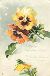 A HAPPY CHRISTMAS TO YOU  two multicoloured pansies above, one yellow below