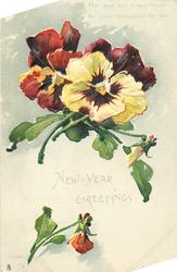 NEW YEAR GREETINGS  yellow pansy with red centre in front of deep red pansies flecked with yellow, red/brown bud below