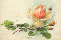 NEW YEAR GREETINGS  peach rose with three buds