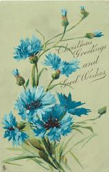 CHRISTMAS GREETINGS AND GOOD WISHES  blue cornflowers