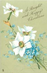A BRIGHT AND HAPPY CHRISTMAS  white narcissi with red rimmed yellow centres, & blue forget-me-nots