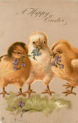A HAPPY EASTER  three chicks, each with flower in beak