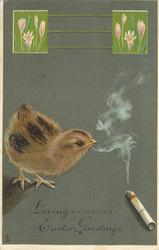 LOVING EASTER GREETINGS chick sniffs smoke from cigarrette