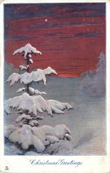CHRISTMAS GREETINGS sunset snow scene, one conifer left, many stars