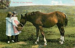 THE PET OF THE PADDOCK