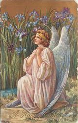 A HAPPY EASTER without verse, sitting angel prays, iris behind