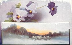 snow scene, four sheep at stream, purple, mauve and white pansies above