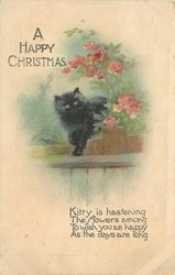 A HAPPY CHRISTMAS  black kitten on fence under flowers
